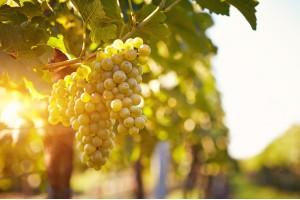 Invertek sodeluje s proizvajalci vina